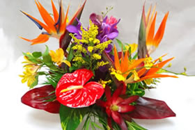 Tropical Flower Arrangements on Tropical Arrangements  Wedding Flowers  Sympathy Flowers  Gift Baskets