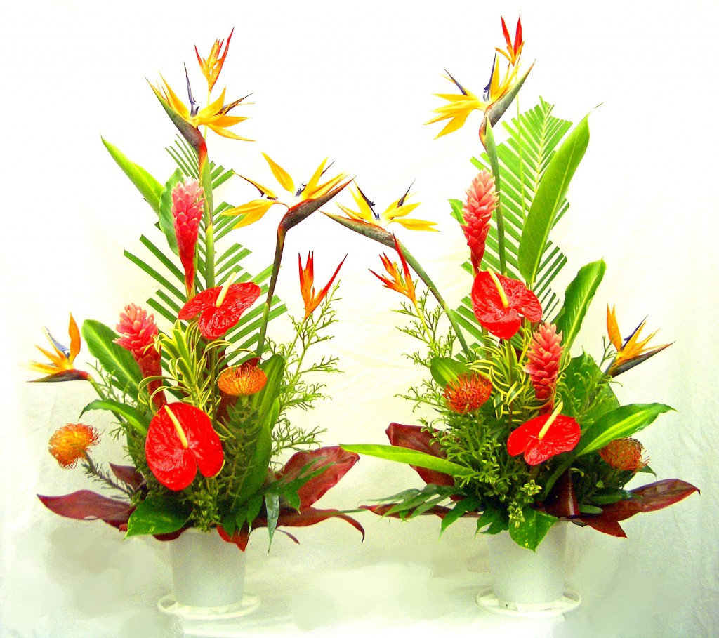 tropical arrangements  a special touch florists serving lahaina, Natural flower